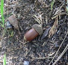 geocache container acorn stash evil tubes geocaching Rite in the Rain natural