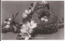 POST CARD BIRDS NEST OF CHAFFINCH.