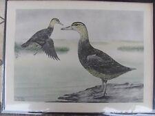 Original  Rex Brasher #133,133a  Hand Colored  Print  Black Duck  #133aREX2 DSS