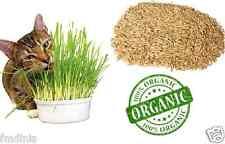 100% Pure Natural Oat Grass Seeds Cat Rabbit Pet +/- 10,000 Seeds.