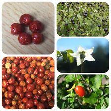 Chiltepin 5 getrocknete Früchte Wildchili ultrascharfe Chilli Chil Tepin Urchili