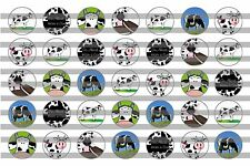 (35) Cows Bottle Cap Image Pre-Cut 16mm