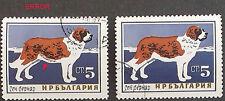 BULGARIA 1964, DOGS, 5 ST.SAINT BERNARD, ERROR, BROWN LINE ON BELLY, CTO
