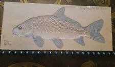 LEON PRAY Signed ORIGINAL Smallmouth Buffalo  Color Fish Drawing