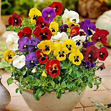 200 pcs flower Seeds Pansy (Viola Tricolor) mix colors