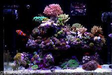 100 pounds of Premium Deco Gulf Live Rock coral aquarium