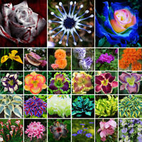 Mixed Colorful Flower Seeds Vegetable Fruit Seed Home Garden Bonsai Plant Decor