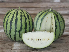 Rare White-Flashed Watermelon- White Wonder - 10 Heirloom Fruit Seeds