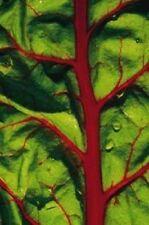RUBY RED SWISS CHARD Beta Vulgaris 30 Seeds