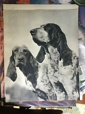 """VINTAGE ART PRINT PHOTO """"FOXHOUNDS OF GASCONY"""" BY H ARMSTRONG ROBERTS 14X18"""" DOG"""