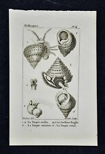 c 1828 Deseve Mollusk Shell Print - Toupie or Top Seashells Trochidae Top Snail