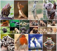 LUSTIGE TIERE (Set 4): 20-er Tierpostkarten-Set / 20 verschiedene Ansichtskarten