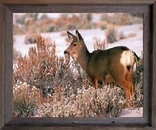Large Mule Deer in Snow Wild Animal Hunting Wall Decor Barnwood Framed Picture