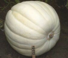 Full Moon GIANT White Pumpkin 10 Seeds!  Comb. S/H! SEE STORE FOR RARE SEEDS!