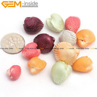 Dyed 12pcs Multi-Color Shell Loose Beads Freeform For Jewelry Making Wholesale