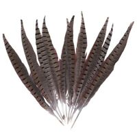 Beautiful Rooster Pheasant Tail Feathers 12-14 Inch Long Costume Decor Mill W7M6