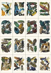 Set of 16 Art Nouveau Insect prints A4 unframed natural history botanical