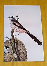BRITISH LIBRARY BIRD POSTCARD ~ LONG-TAILED TITMOUSE BY EDWARD DONOVAN,1794-1819