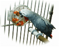 Parrot Toy Large Foraging Feeder for Treats Medium