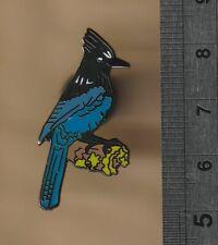 Steller's Jay -  bird pin badge