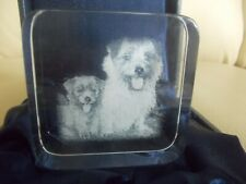 Norfolk Terrier Pups Square Glass Paperweight, Nib, Laser Cut Image, Heavy, Mint