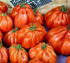 12 SEEDS CUOR DI BUE Giant Boeuf Tomato Cour Coure ORGANIC Oxheart Beefsteak BIO