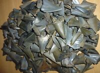 Lot of 15 MAKO FOSSIL SHARK TEETH,from BELGIUM. MEGALODON ERA.