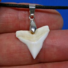 Xl 1 inch White Bull Shark Tooth Adjustable Cord Necklace Great Sharks Teeth