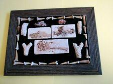 Fossil Fish & Shark Teeth Display