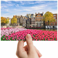 "Amsterdam Netherlands Tulips Small Photograph 6"" x 4"" Art Print Photo Gift #3035"