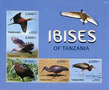 Tanzania 2015 MNH Ibises of Tanzania 5v M/S Birds Glossy Hadada Olive Ibis