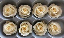 8 Stabilisierte, auf Glycerinbasis konservierte Rosenköpfe; Ewig haltbare Rosen