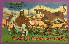 Vintage Antique Post Card, Cow Humor