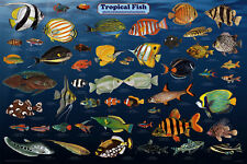 Tropical Fish Aquarium Educational Science Classroom Chart Print Poster 24x36
