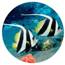 Enamel Zebra Banner Saltwater Fish 20mm Snap Charm For Ginger Snaps Jewelry