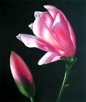 Quality Hand Painted Oil Painting Red Magnolia and Bud 20x24in