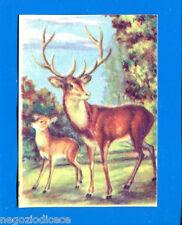 ANIMALI - Lampo 1964 - Figurina-Sticker n. 135 - CERVO -New