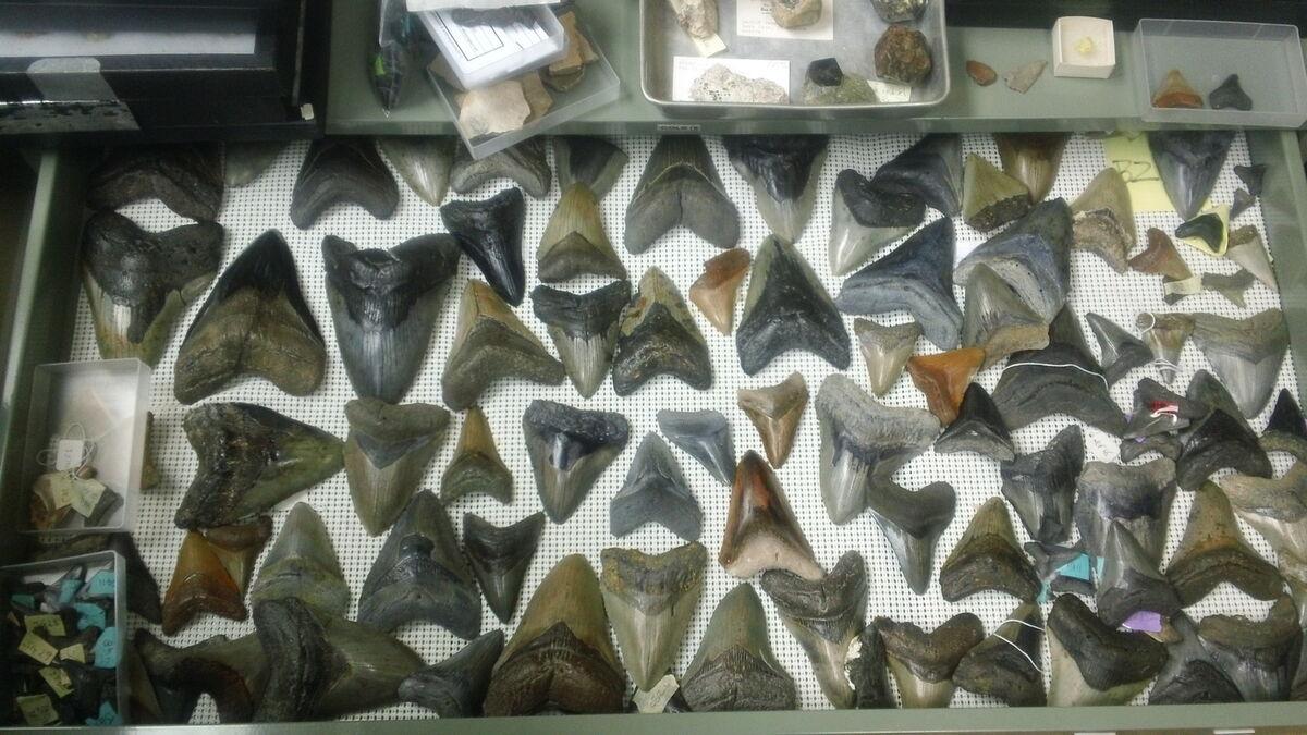 Megalofossils