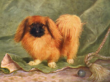 PEKINGESE CHARMING DOG GREETINGS NOTE CARD CUTE DOG SURROUNDED BY BUTTERFLY RING