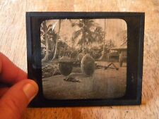 MAGIC LANTERN GLASS SLIDE PHOTO WATER BUFFALO CARTS GUAM ISLAND OLD