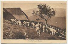 42/315 AK AUSTRIEB ZUR WEIDE nach Großpostwitz JAHR 1908