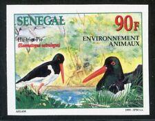 TIMBRE AFRIQUE SENEGAL / NEUF NON DENTELE N° 1513 ** FAUNE / HUITRIER PIE