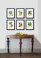 Botanical Art SET OF 6 Unframed Art LEMON ORANGE Kitchen Wall Decor