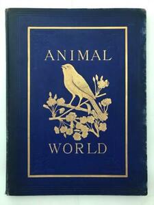 Vintage 1903 The Animal World RSPCA Magazine (Full Year 12 Issues)