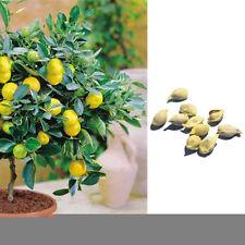 10Pcs Lemon Tree Heirloom Rare Fruit Seeds Bulbs for Garden Indoor Outdoor Home