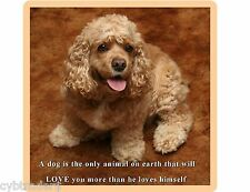 Cute Cocker Spaniel  Dog Refrigerator  / Tool Box Magnet Gift Card Insert