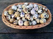 30 echte Wachteleier natur Eier Pünktcheneier Dekoei 3cm Ostern Eier 0,22€//St