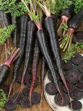 Black Nebula Carrot Seeds 100, 200, 400, 1000 colorful beautiful RARE bulk