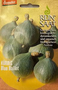 Kürbis Blue Ballet Samen - Demeter Saatgut biologisch Reinsaat Kürbissamen