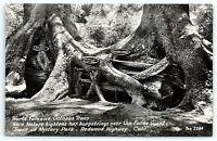 VTG Postcard Real Photo RPPC California CA Octopus Tree Redwood Mystery Park B1